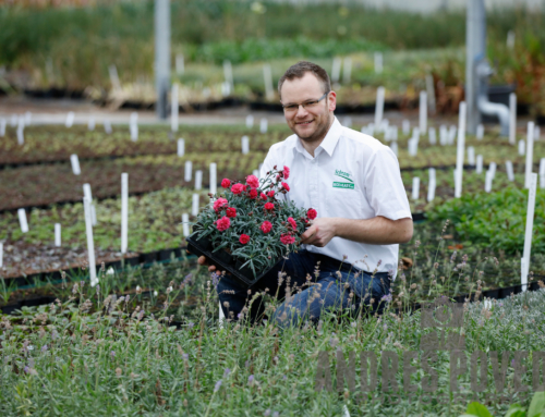Perrenial Passion. Barry Lupton interviews Tim Schram of Schram Plants